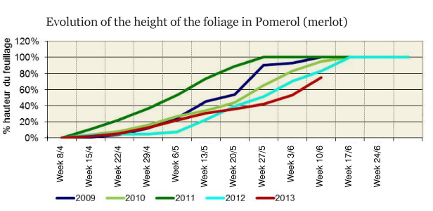 Foliage height in Pomerol